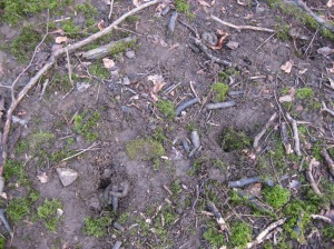 Pits of badger latrine