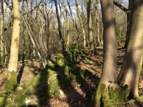 Tumbled walls stand out like enormous green catepillars in their vibrant green moss coats, and green is beginning to seep into the floor of the wood. The sun is bright, and the shadows of trunks fall over the ground making patterns with contrast.