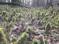 Look what I found today - a miniature forest beneath the trees!