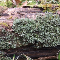 The details of the lichen's life came as a surprise; I had completely overlooked the fascinating story unfolding in each minute growth of lichen.