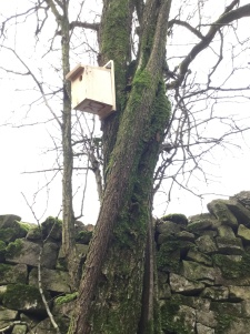 One of our new nest boxes, numbered and waiting for spring.