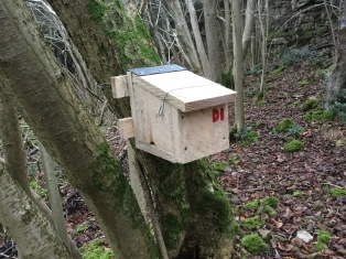 Dormouse box one! There are twenty of these luxury appartments now waiting and ready to entice any passing dormice!