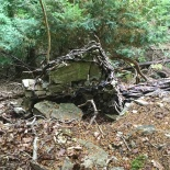 Here you can see an old yew has fallen. Its roots had been anchored so tightly into the limestone pavement, that as it has fallen, it has ripped huge chunks of it up.